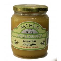 Miele di Trifoglio Biologico - Melauro - 500g